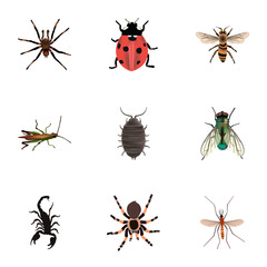 Realistic Dor, Wasp, Tarantula And Other Vector Elements. Set Of Bug Realistic Symbols Also Includes Poisonous, Ladybird, Dor Objects.