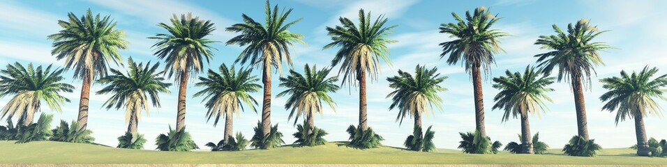 Trees in a row, palms against the sky, 3d rendering