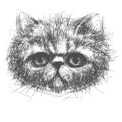 Photo sur Aluminium Croquis dessinés à la main des animaux persian cat
