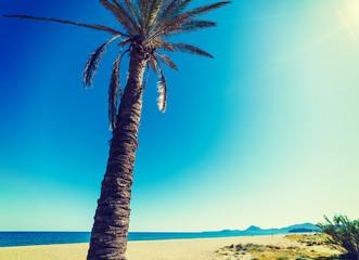 Palm tree under a shining sun