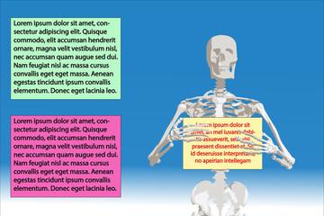 skeleton human bones skull body medicine
