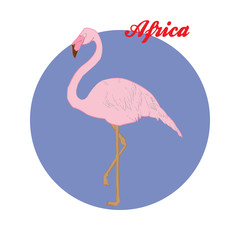 Pink Flamingo illustration on the background of the circle with the inscription Africa. Vector.