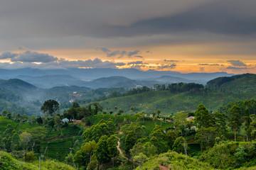 Teeplantagen während eines Sonnenuntergang in Haputale