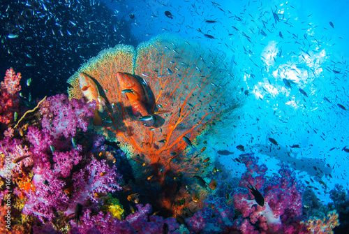 Beautiful coral garden reef with school fishes all colorful in Similan island, Thailand, Scuba diving Underwater seascape concept.