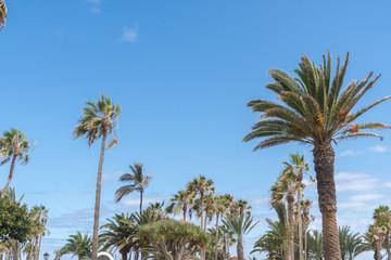 Palmen in Spanien