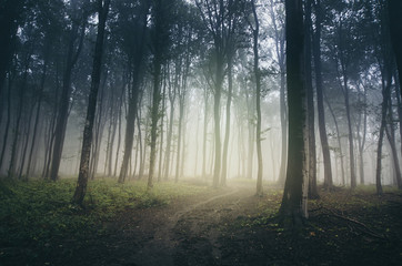 misty path through dark mysterious forest