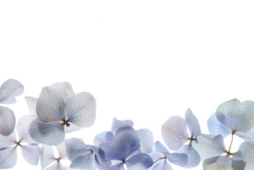 Fond de hotte en verre imprimé Hortensia flowers composition