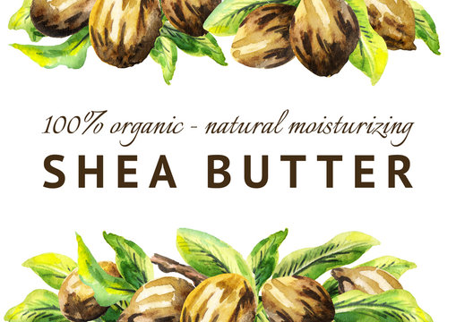 Shea nuts and green leaves background. Watercolor hand-drawn illustration