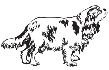Decorative standing portrait of dog Cavalier King Charles Spaniel vector illustration