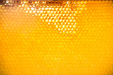 Unfinished fresh honey in honeycombs