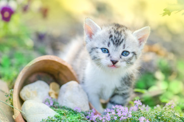 Kitten in the garden with flowers on background