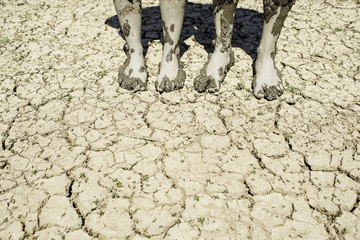 Dry Earth Global Warming