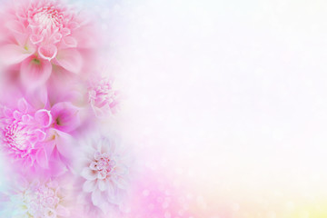 beautiful pink and white dahlia flower background in soft vintage tone with glitter light and bokeh, copy space for text