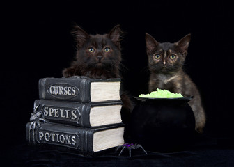One black and brown and one Tortie kitten sitting on a black surface with pseudo books stacked in front of them next to a cauldron with glowing yellow rock potion, looking directly at viewer.