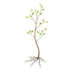 Seedling tree flat icon
