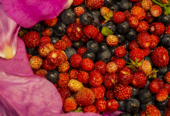 Background of blueberries and strawberry rose petals..
