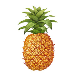 Realistic drawing of pineapple.