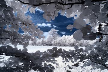 Infrarot - Infrared
