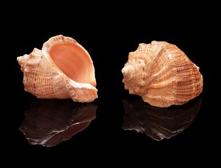 Seashell set on a black background isolated