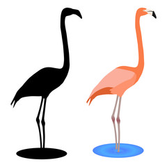 Flamingo. Black silhouette icon and pink drawing