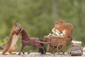 squirrel with horse