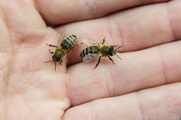 Bees on hand, green background.