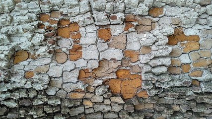 White ashy bark of tree