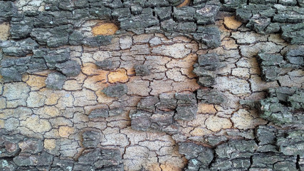 Colorful bark of tree_2
