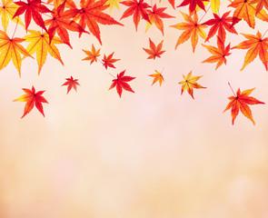 紅葉したモミジの葉 秋のイメージ