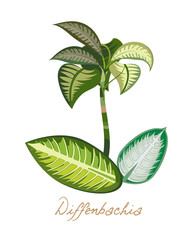 Tropical forest herbs and plants with leaves, flowers. Exotic diffenbachia.