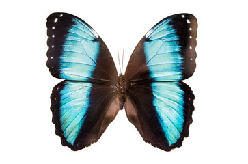 Tropical butterfly isolated