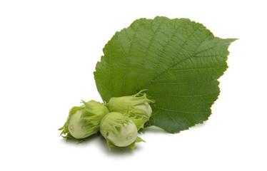 Green walnut hazel isolated