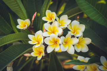 White and yelow flowers
