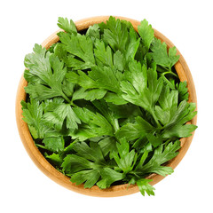 Fresh flat leaf parsley in wooden bowl. Green leaves of Petroselinum crispum, used as herb, spice and vegetable. Isolated macro food photo close up from above on white background.