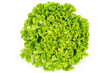 Batavia lettuce front view. Also French or summer crisp. Fresh bright green salad head with crinkled leaves and a wavy leaf margin. Variety of Lactuca sativa. Macro food photo close up.