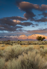 Sunrise over Mount Tom and Mount Basin in Eastern Sierra Nevada, shrub-steppe in foreground