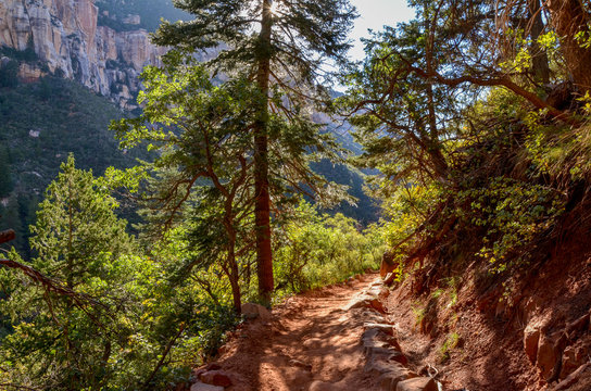 dirt trail passing through ponderosa pine forest on the slopes of Roaring Springs Canyon North Kaibab trail, North Rim, Grand Canyon National Park, Arizona, USA