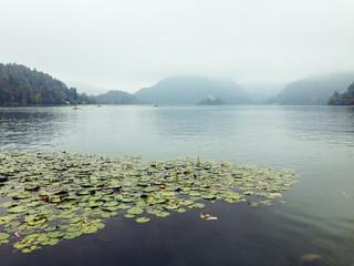 Beautiful Lake in the Fog