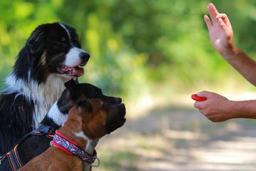 three dogs education