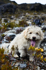 poodle sitting on a hiking path