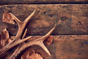 Rustic deer antlers and fallen brown leaves