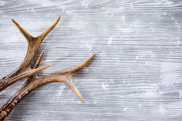 Deer antlers against wooden background