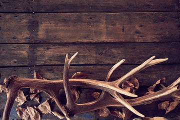 Composition of deer antlers with dry leaves Wall mural