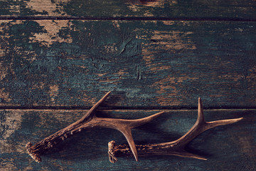 Shed antlers for a buck or deer on vintage wood Wall mural