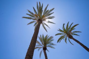 three palm trees from below against sun in blue clear sky