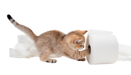 The kitten plays with a roll of toilet paper. Isolated on white background