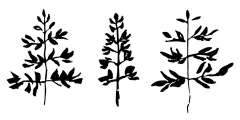 Set of hand drawn plant. Sketch style vector illustration. Leaves as element of design.
