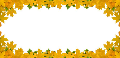 Autumn leaves isolated on white background with empty space, border design panoramic banner