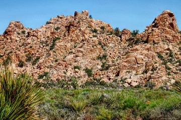 Rocky dessert landscape with Yucca