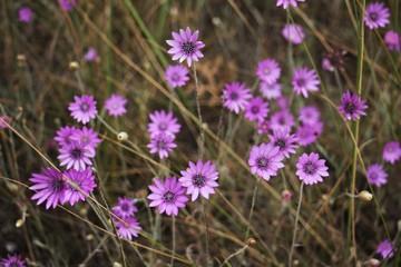 Wild pink flowers